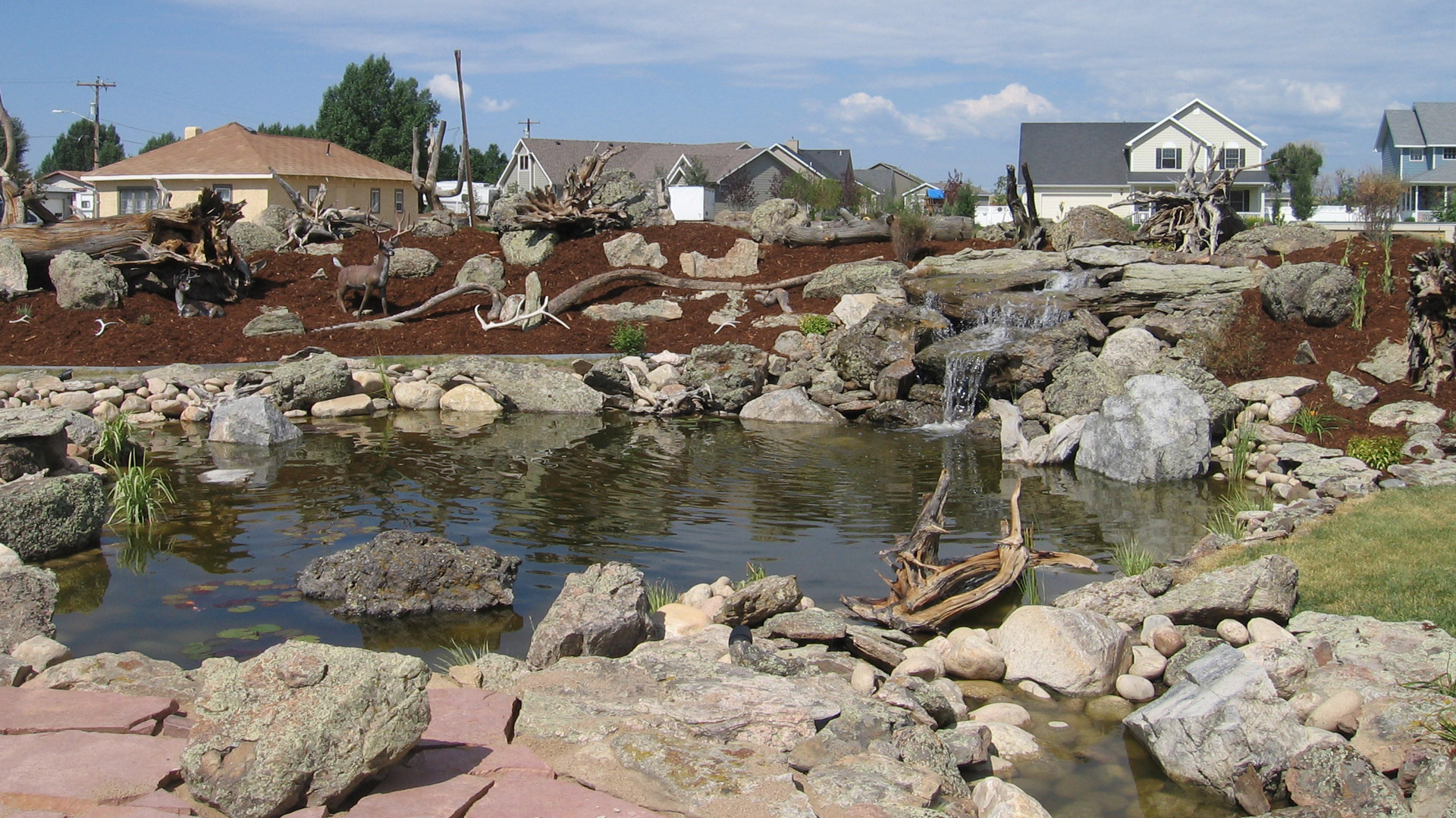 New pond, waterfall and landscaping constructed at a home in Loveland, CO.