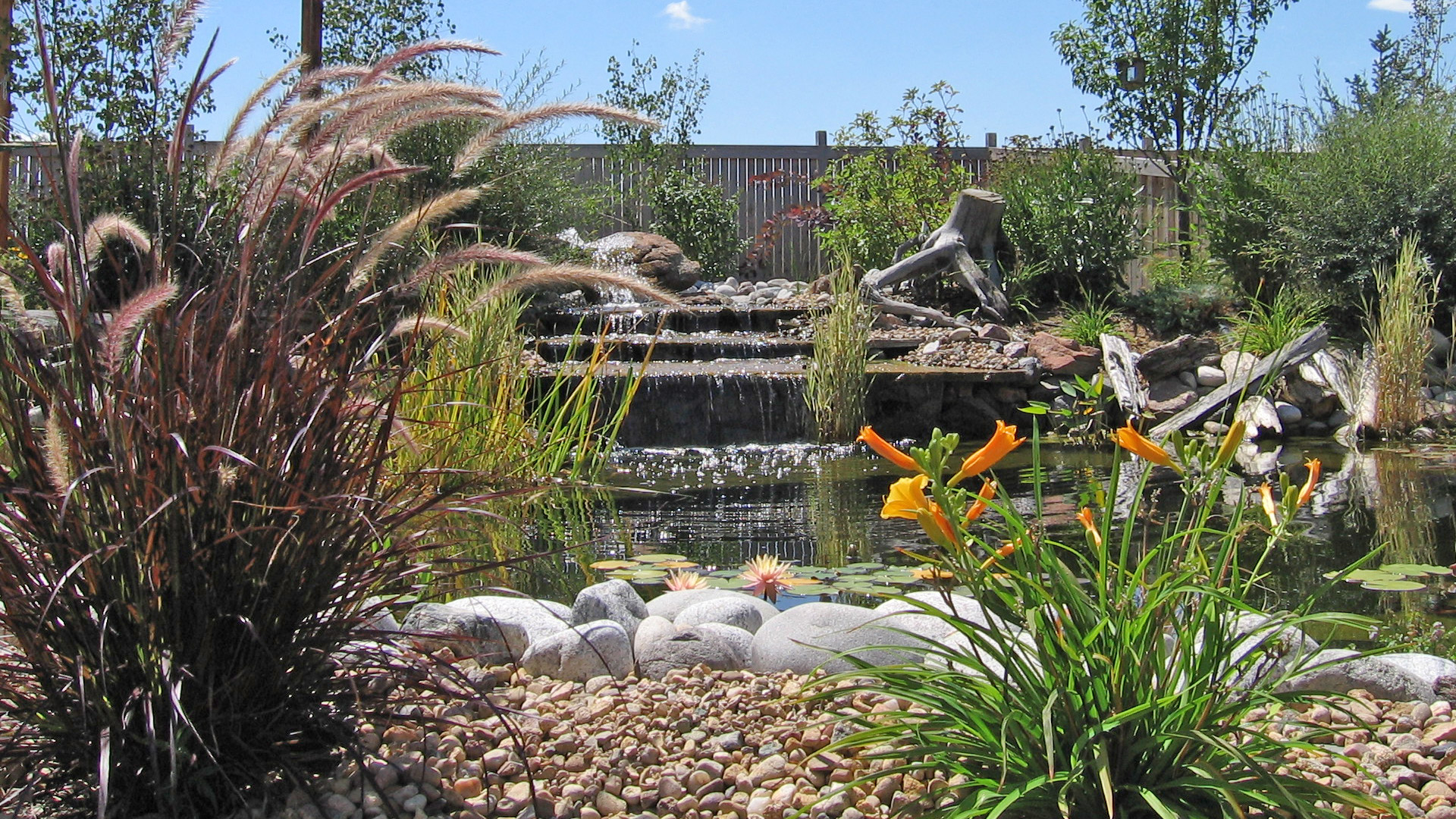 New rock water fall into a pond with a patio in Loveland, CO.