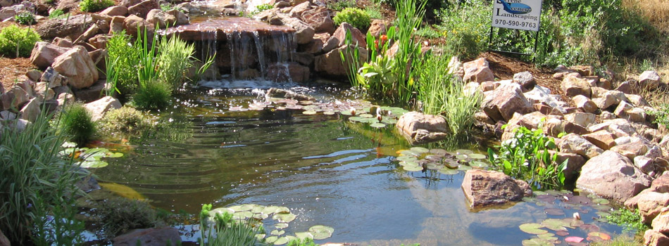 Custom natural pond with a waterfall feature at a residential property in Windsor, CO.